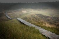 Titelbild: Dünengang auf Amrum